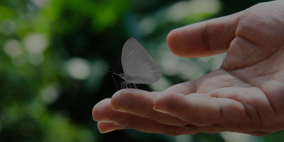Mariposas eventos